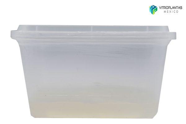 vitro-rey-2