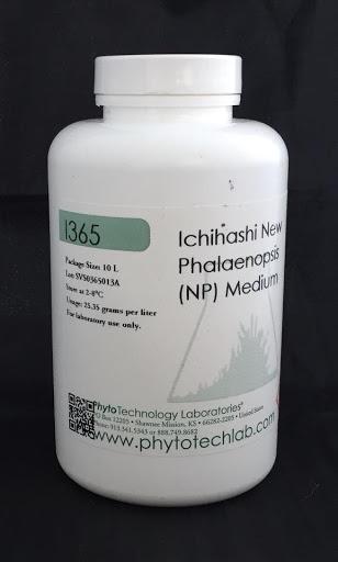 Ichihashi phalaenopsis